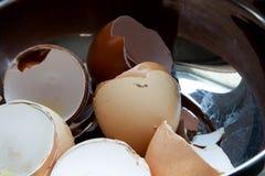 Cáscaras de huevo Fotos de archivo libres de regalías
