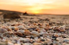 Cáscaras de la almeja en la playa foto de archivo