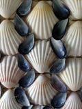 Cáscaras de la concha de peregrino y del mejillón Imagen de archivo