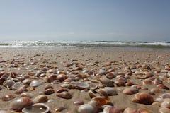 Cáscaras de la playa Imagen de archivo libre de regalías