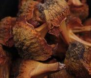 Cáscaras de la semilla de una planta del cycad Fotos de archivo libres de regalías