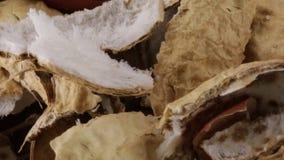 Cáscaras de los cacahuetes almacen de video