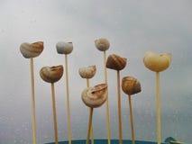 Cáscaras de los caracoles Imagen de archivo