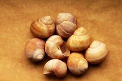 Cáscaras de los caracoles de la uva Fotografía de archivo libre de regalías