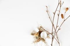 Cáscaras de los huevos de codornices Fotografía de archivo