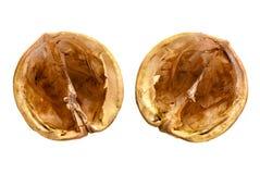 Cáscaras de nuez Fotografía de archivo libre de regalías