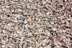 Cáscaras de ostra Foto de archivo libre de regalías