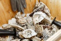 Cáscaras de ostras y un cuchillo en una cesta en el hielo Imagen de archivo libre de regalías