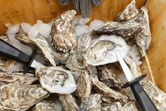 Cáscaras de ostras y un cuchillo en una cesta en el hielo Imágenes de archivo libres de regalías