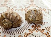 Cáscaras decorativas del mar Fotos de archivo