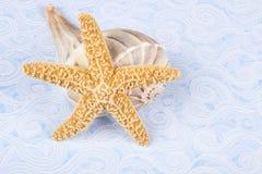 Cáscaras del bucino de las estrellas de mar y del relámpago Fotografía de archivo libre de regalías
