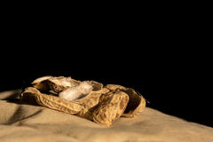Cáscaras del cacahuete en la opinión del primer Fotos de archivo libres de regalías