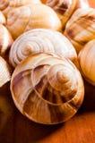 Cáscaras del caracol Fotografía de archivo libre de regalías