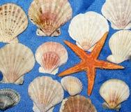 Cáscaras del mar Imágenes de archivo libres de regalías