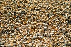 Cáscaras del mar Fotografía de archivo libre de regalías