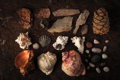 Cáscaras del mar con el coral y la piedra en el fondo oscuro Fotografía de archivo