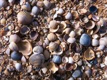 Cáscaras del mar de Imágenes de archivo libres de regalías