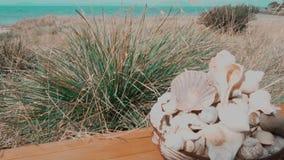 Cáscaras del mar de la hierba de la escena de la playa almacen de metraje de vídeo
