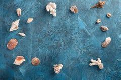 Cáscaras del mar en fondo de madera azul Fotos de archivo libres de regalías