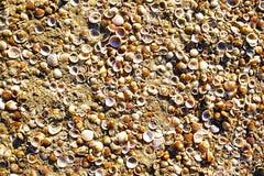 Cáscaras del mar en la arena como fondo Fotos de archivo