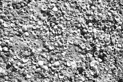 Cáscaras del mar en la arena como fondo Foto de archivo libre de regalías