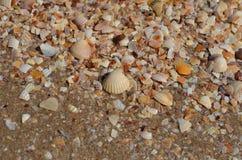 Cáscaras del mar en la foto del primer de la orilla Foto de archivo libre de regalías