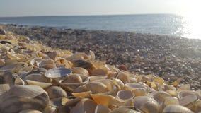 Cáscaras del mar en la orilla Foto de archivo libre de regalías