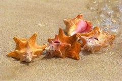 Cáscaras del mar en la orilla imagen de archivo libre de regalías