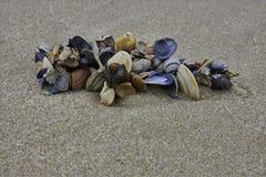Cáscaras del mar en la playa Fotos de archivo