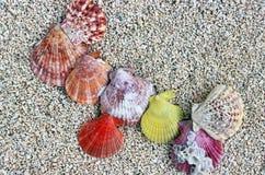 Cáscaras del mar en la playa Foto de archivo
