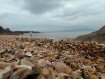 Cáscaras del mar en la playa imágenes de archivo libres de regalías