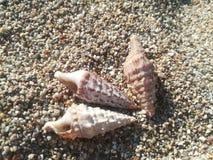Cáscaras del mar en un fondo de pequeños guijarros Foto de archivo