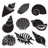 Cáscaras del mar del vector Siluetas de la concha marina fijadas aisladas stock de ilustración
