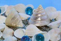 Cáscaras del mar, vidrio decorativo Fotos de archivo libres de regalías