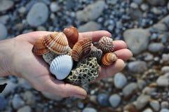Cáscaras del mar y piedras de piedra pómez Imágenes de archivo libres de regalías