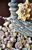 Cáscaras del mar y piedras del río Fotografía de archivo