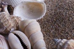 Cáscaras del molusco con la arena de la playa Foto de archivo libre de regalías
