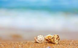 Cáscaras en arena en el lado de mar Fotos de archivo