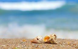 Cáscaras en arena en el lado de mar Imagen de archivo libre de regalías