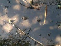 Cáscaras en bosque del mangle Foto de archivo