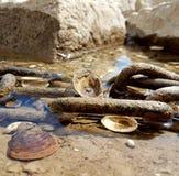 Cáscaras en el agua Foto de archivo