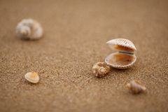 Cáscaras en el arena de mar Imagenes de archivo