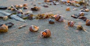 Cáscaras en la arena Imagen de archivo