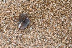 Cáscaras en la orilla Foto de archivo