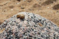 Cáscaras en la piedra Foto de archivo libre de regalías
