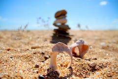 Cáscaras en la playa Foto de archivo libre de regalías