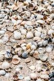 Cáscaras en la playa Fotos de archivo libres de regalías