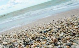 Cáscaras en la playa Fotos de archivo