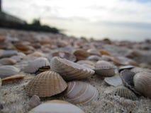 Cáscaras en la playa Imagenes de archivo