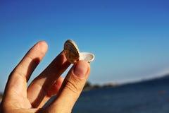 Cáscaras en la playa de piedra MAR ADRIÁTICO fotos de archivo